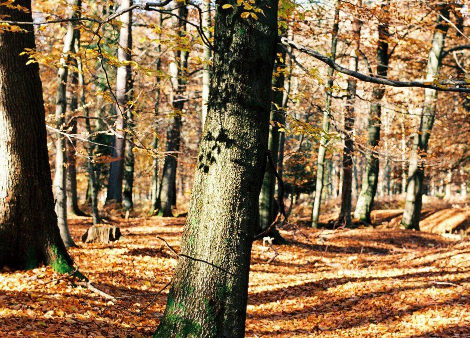 Herbstfarben auf Kodak Ektar